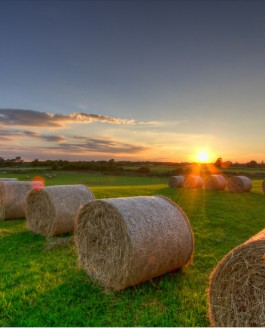A Golden Autumn Sunset over the Hay